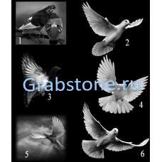 Птицы и животные 1-6
