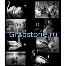 Птицы и животные 7-14